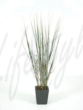 Grass plant bamboo