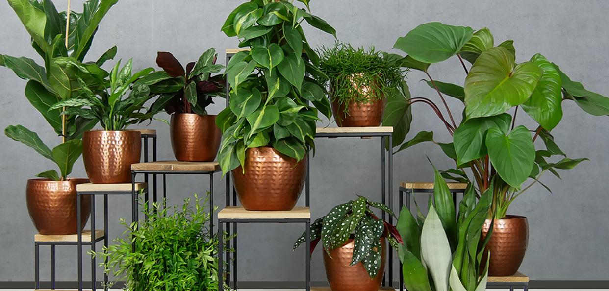 planten mix