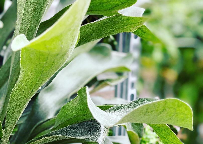 kamerplanten verzorging encyclopedie
