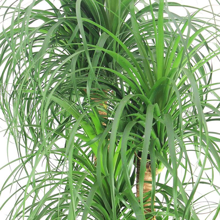 Fabulous Kamerplanten voor in de volle zon kopen? - 123planten.nl @OC09