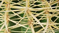 Bolcactus kopen