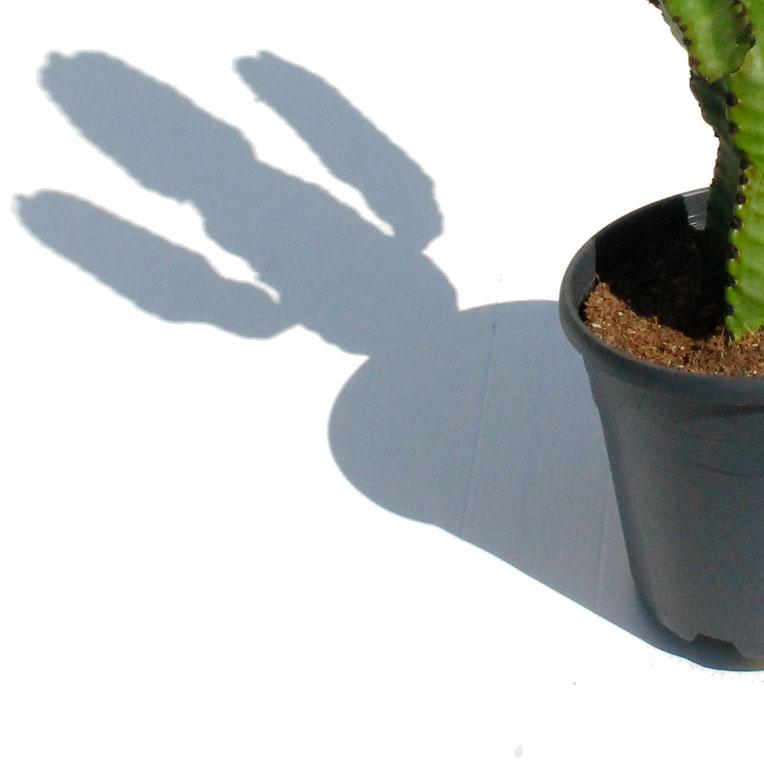 Kamerplanten verzorging in de volle zon