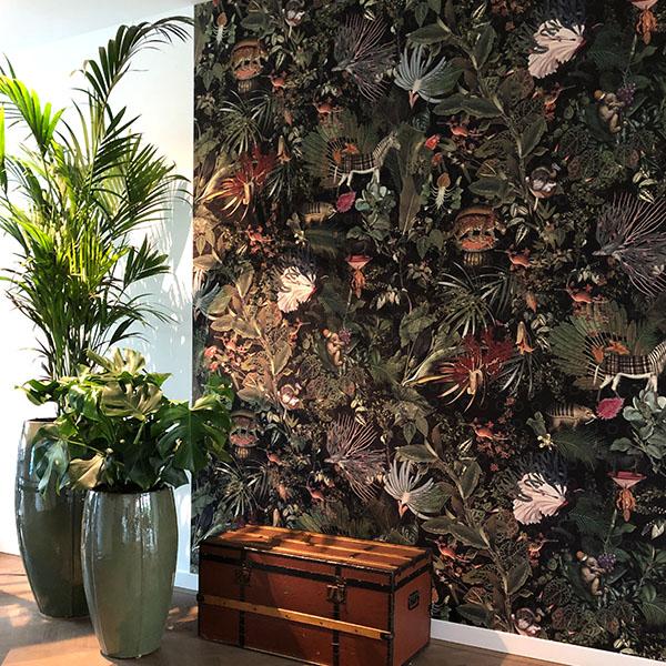 180 - 225 cm planten