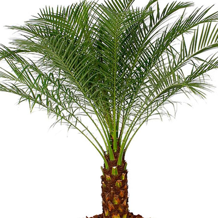 Iets Nieuws Kamerplanten voor in de volle zon kopen? - 123planten.nl @BY57