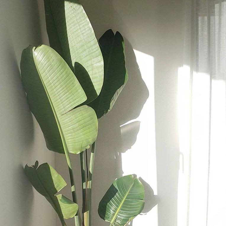 Zon liefhebbende planten