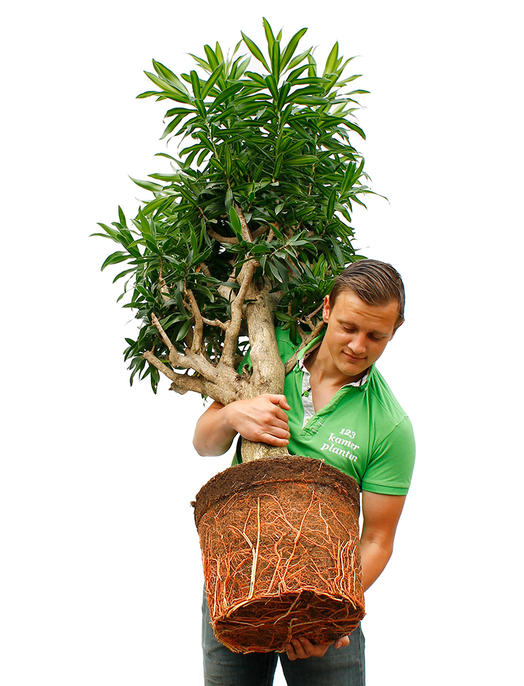 Grote kamerplanten webshop
