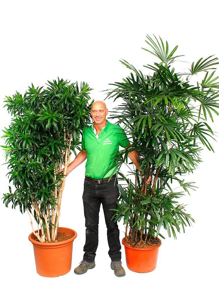 Grote planten kopen?