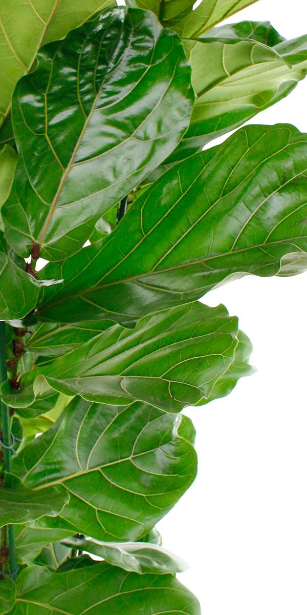Groene kamerplanten kopen