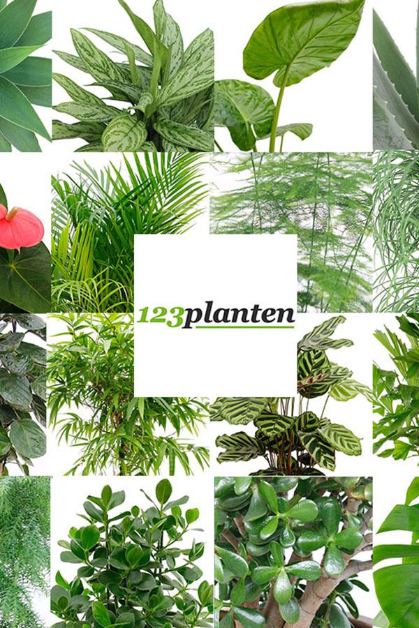 Decoratie Planten Binnen.Online Kamerplanten Kopen Grootste Assortiment 123planten Nl