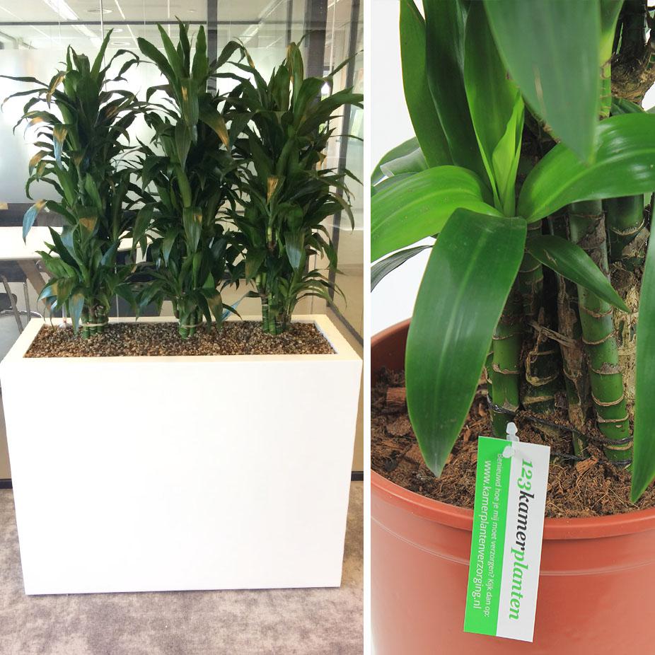 Grondplanten voor kantoor