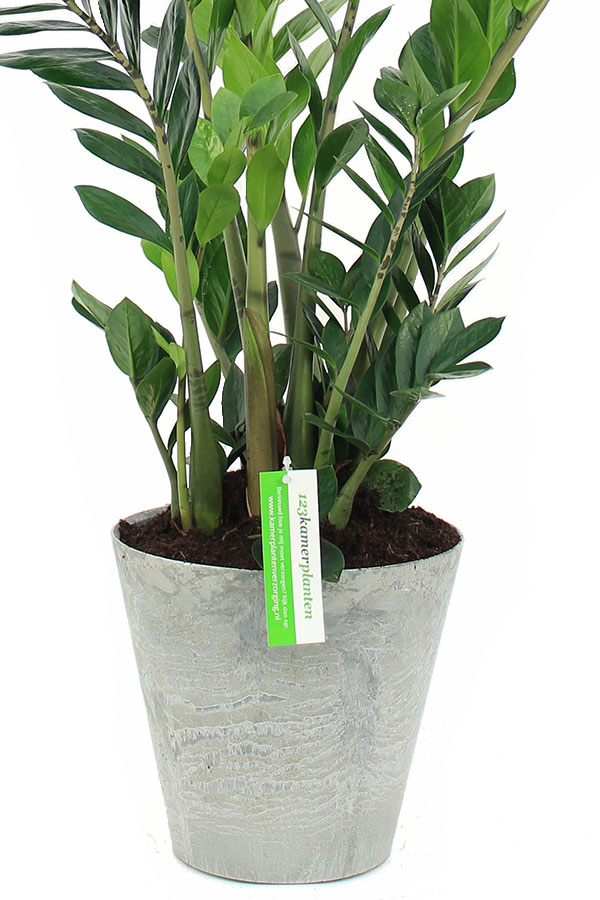 Artstone plantenbak met kamerplant