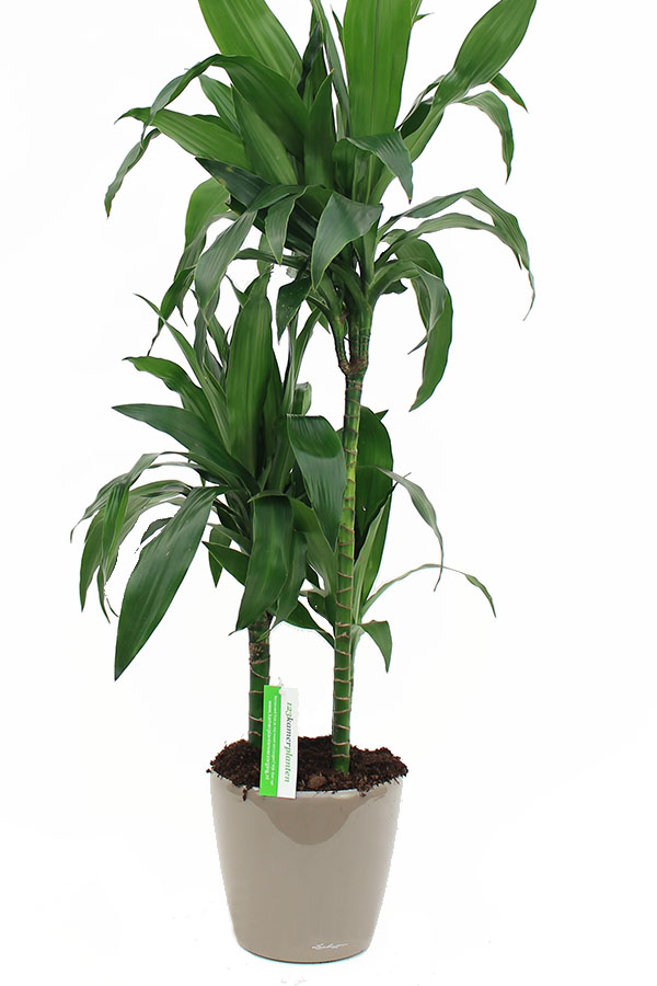 Lechuza plantenbak met plant