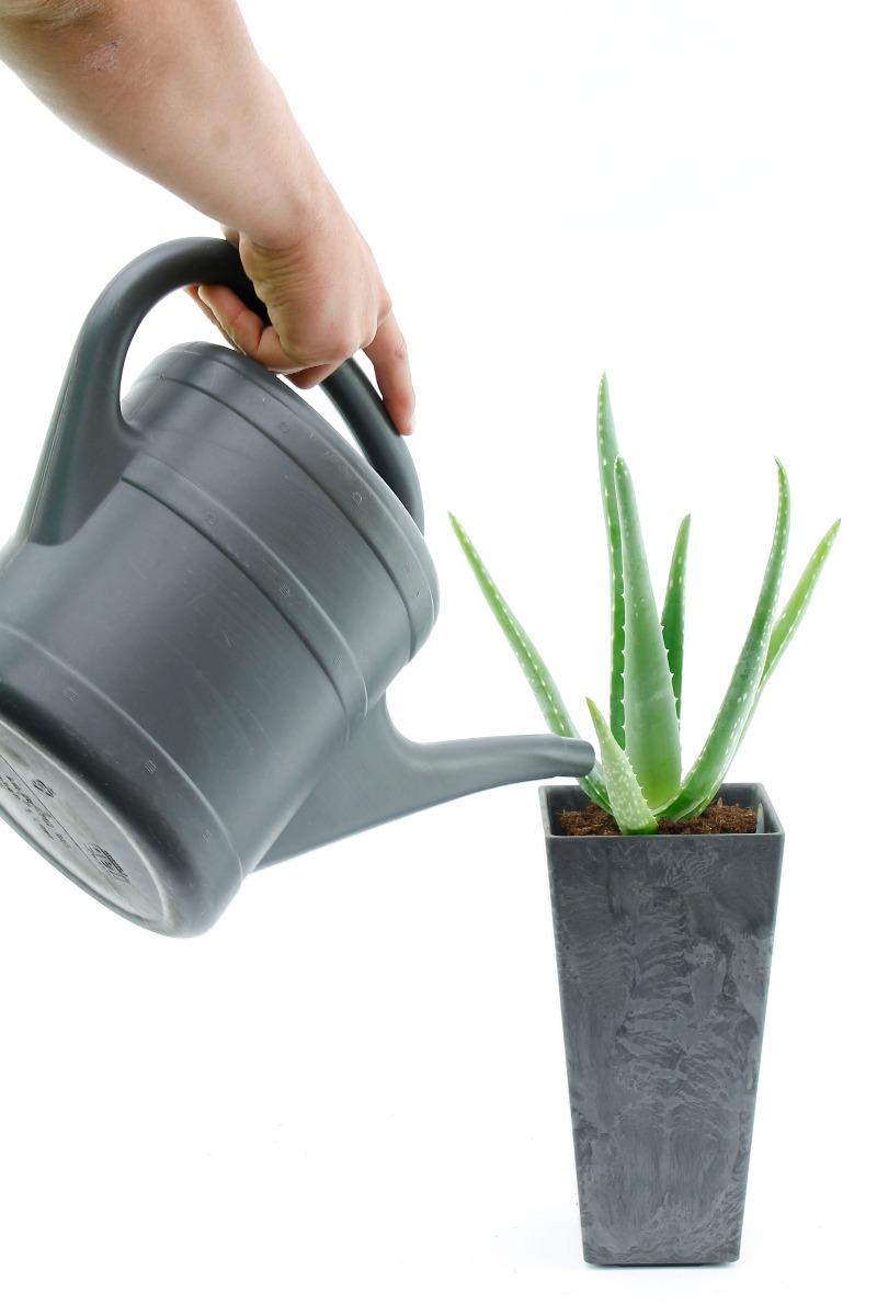 Vetplant water geven