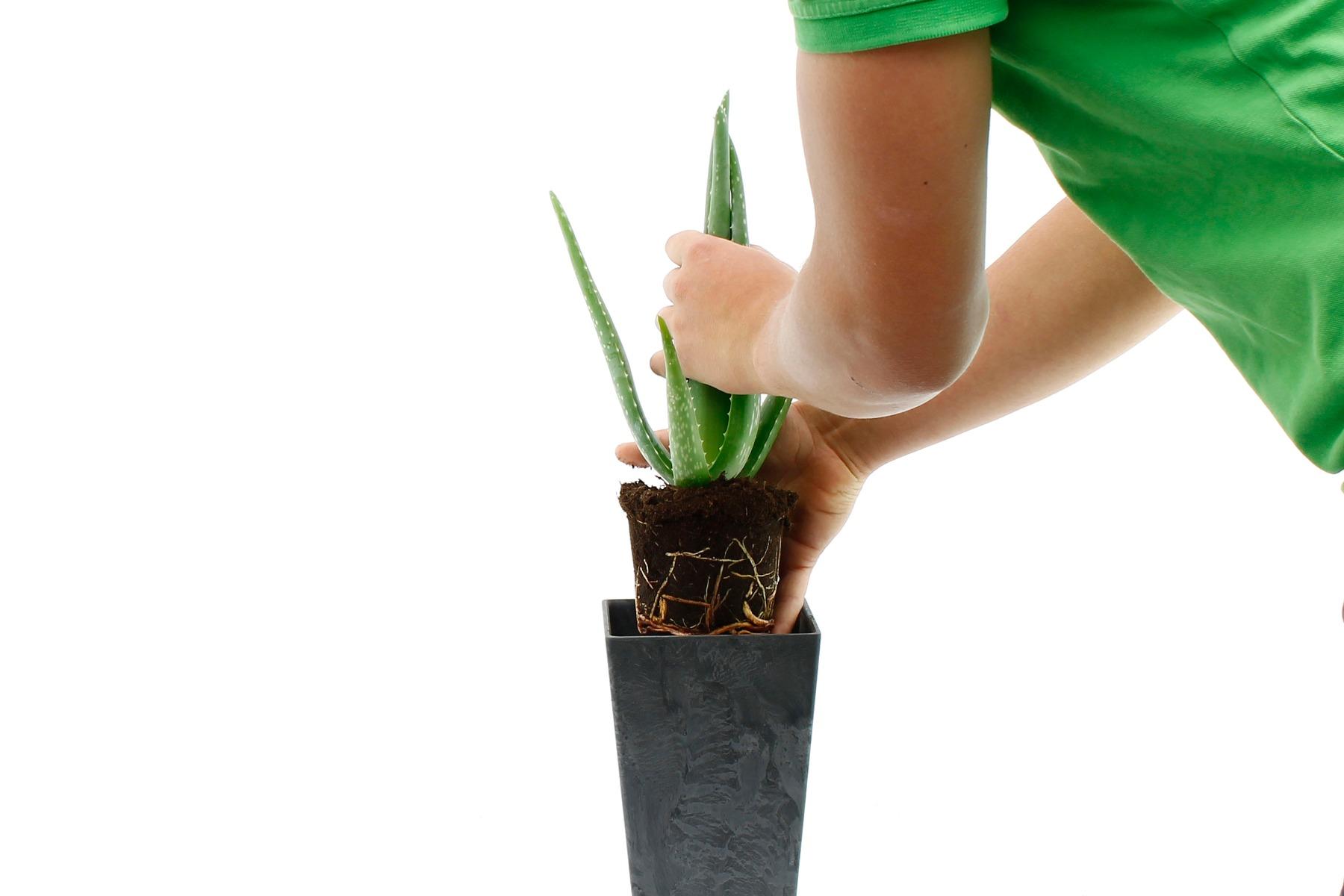 Vetplant verpotten