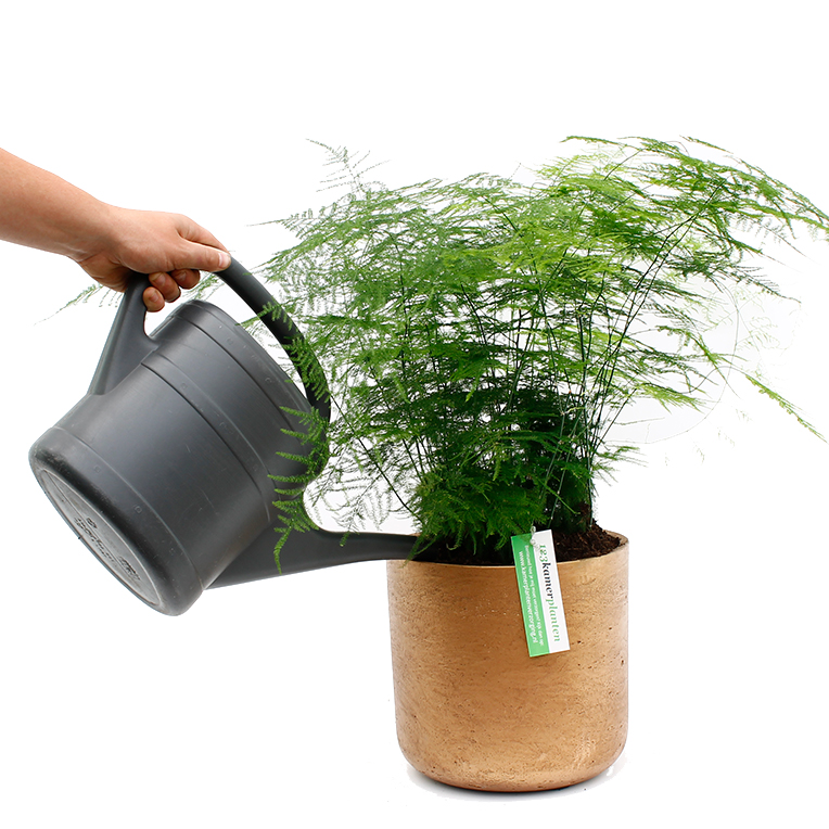 Asparagus water geven