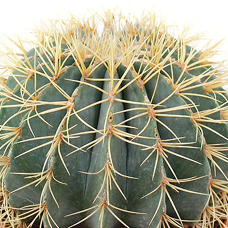 Cactus verzorging
