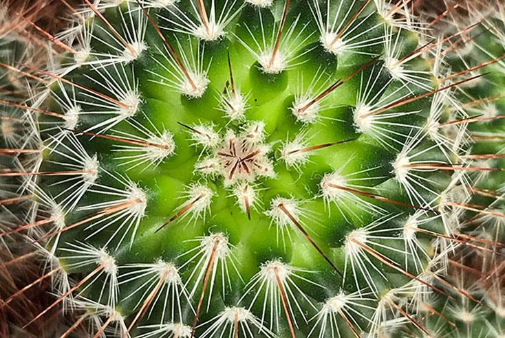 cactus van bovenaf