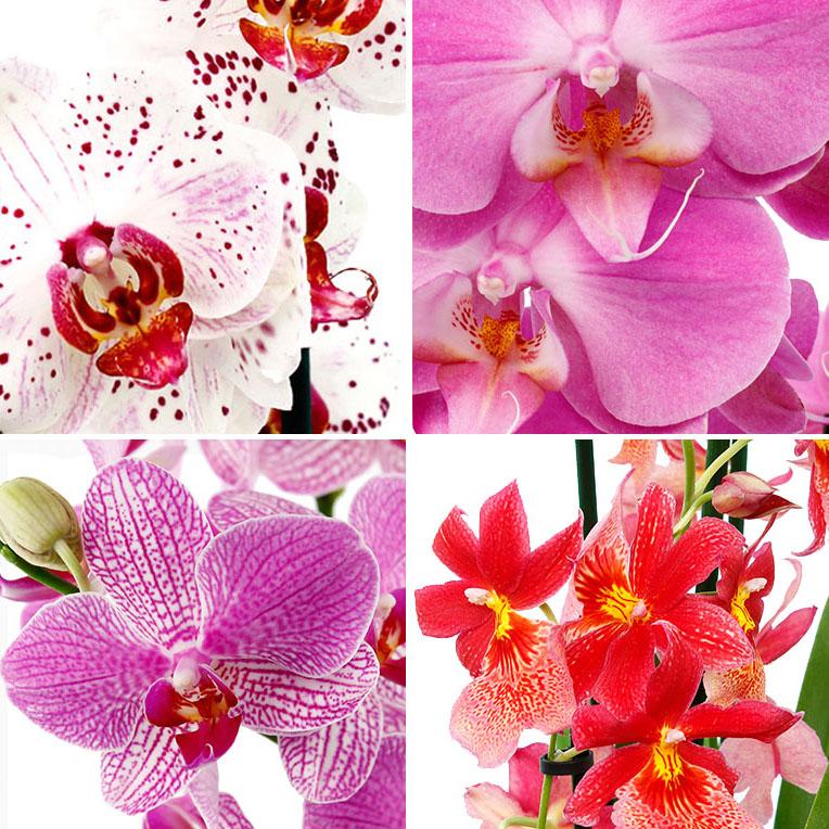 Orchideeën verschillende kleur