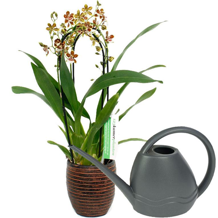 Orchidee water geven
