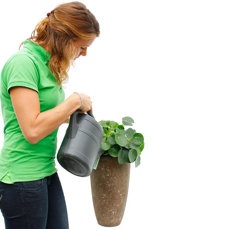 Pannenkoekenplant water geven