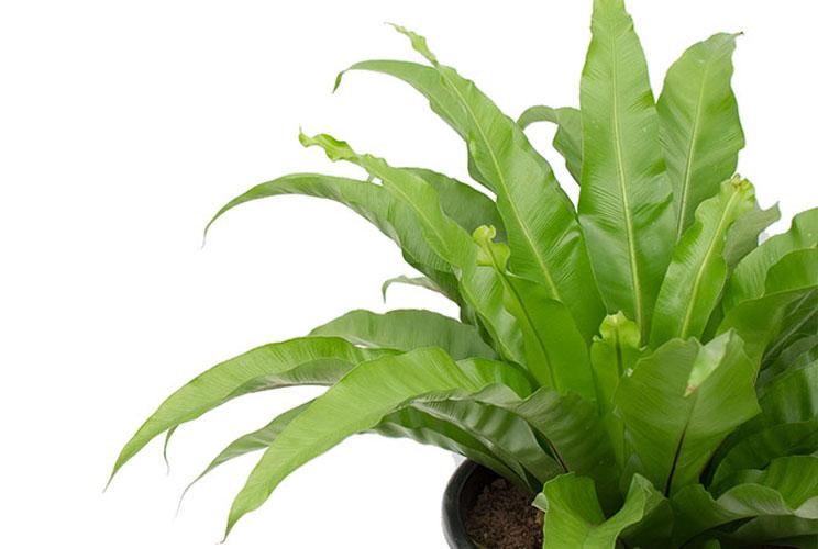Varens Verzorging 123planten Nl