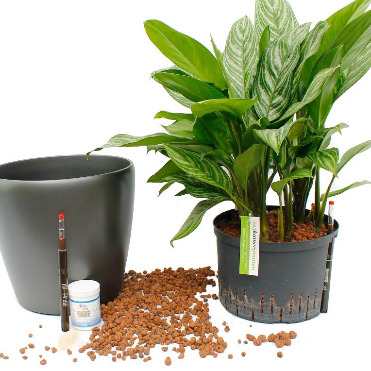 hydrokultur-pflanzen-sortiment