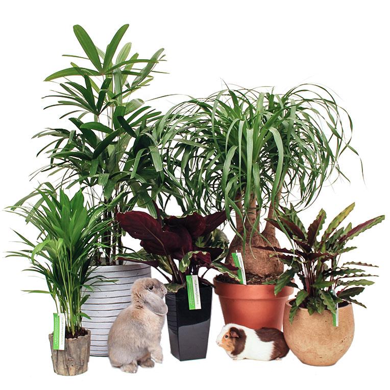 niet giftige kamerplanten kopen? - 123planten.nl