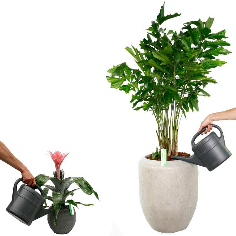 Verschillende grootte planten