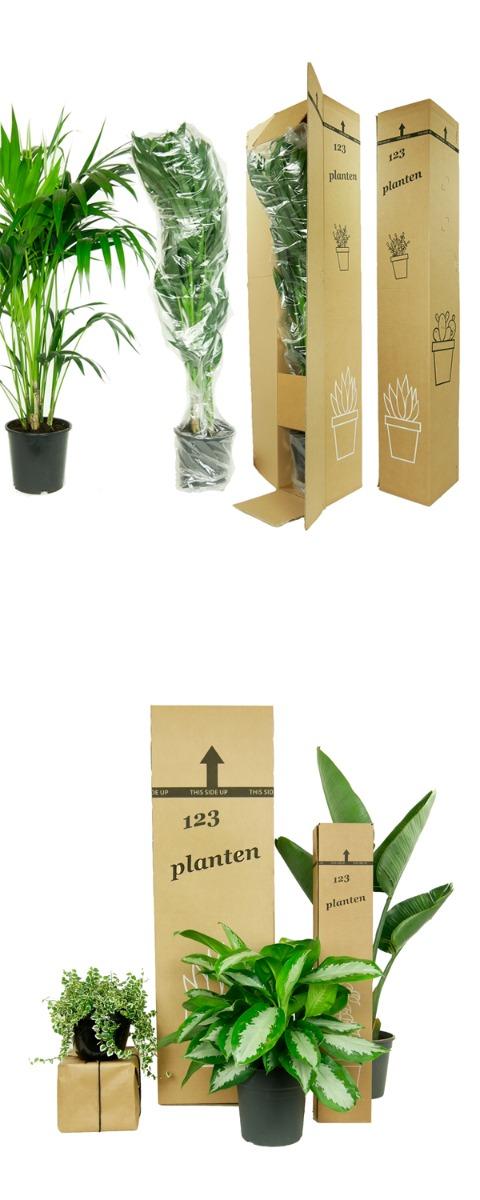 Ingepakte planten 123planten