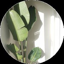 kamerplanten voor in de zon